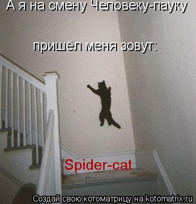 Котоматрица: А я на смену Человеку-пауку  Spider-cat пришёл меня зовут: