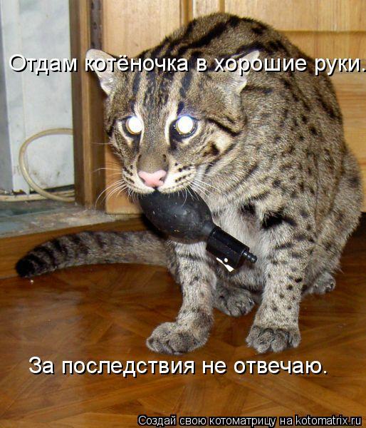 Котоматрица: Отдам котёночка в хорошие руки. За последствия не отвечаю.
