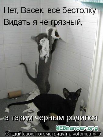 Котоматрица: Нет, Васёк, всё бестолку. Видать я не грязный, а таким чёрным родился