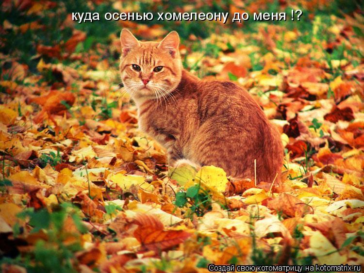 Котоматрица: куда осенью хомелеону до меня !?