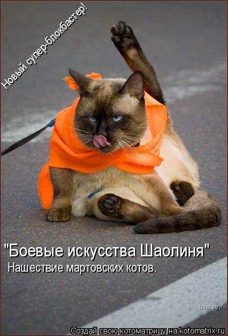 """Котоматрица: """"Боевые искусства Шаолиня"""" Новый супер-блокбастер! Нашествие мартовских котов."""