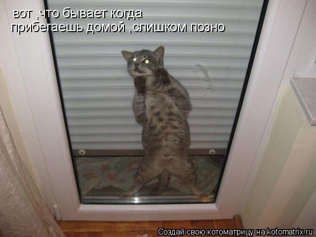 Котоматрица: вот ,что бывает когда прибегаешь домой слишком позно вот ,что бывает когда прибегаешь домой слишком позно вот ,что бывает когда прибегаешь