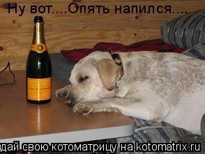 Котоматрица: Ну вот....Опять напился....