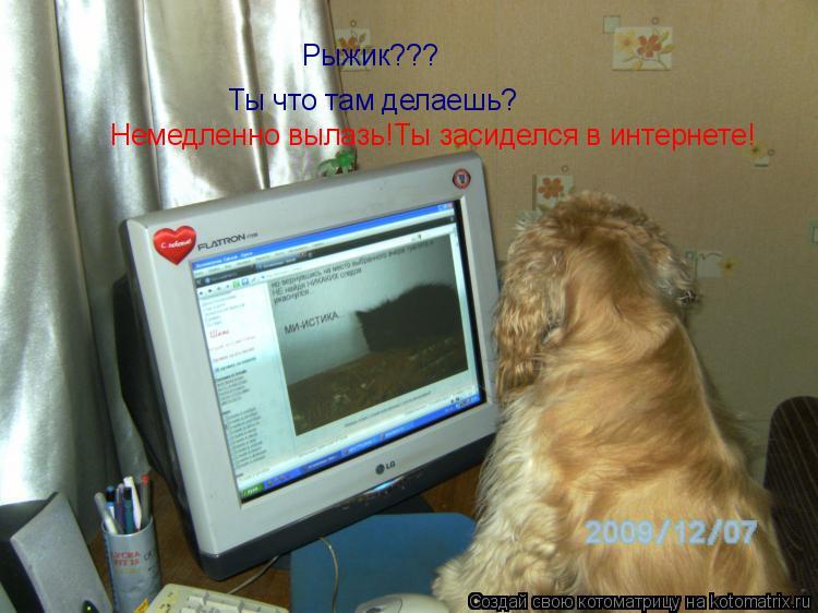 Котоматрица: Рыжик??? Ты что там делаешь? Немедленно вылазь!Ты засиделся в интернете!