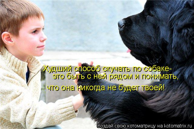 Котоматрица: что она никогда не будет твоей! это быть с ней рядом и понимать, Худший способ скучать по собаке-