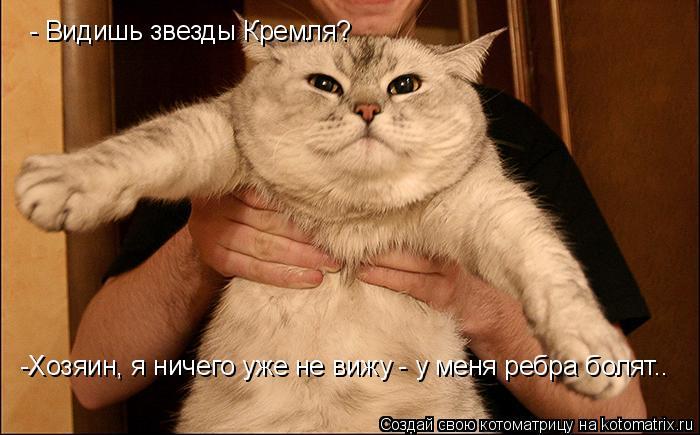Котоматрица: - Видишь звезды Кремля? -Хозяин, я ничего уже не вижу - у меня ребра болят..