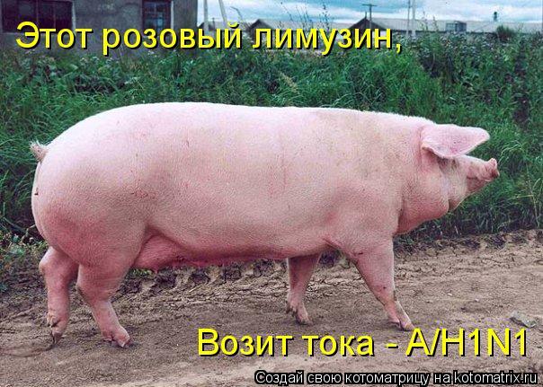 Котоматрица: Этот розовый лимузин, Возит тока - A/H1N1