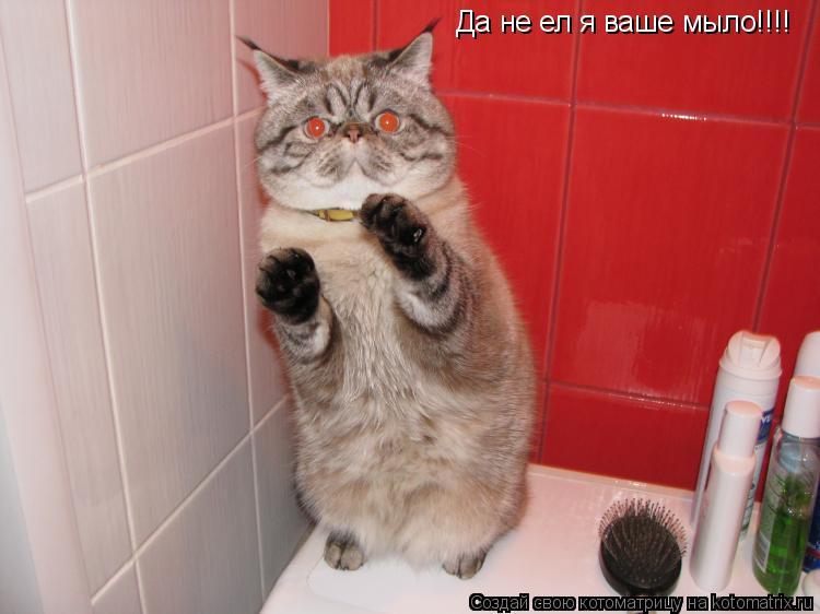 Котоматрица: Да не ел я ваше мыло!!!! Да не ел я ваше мыло!!!!