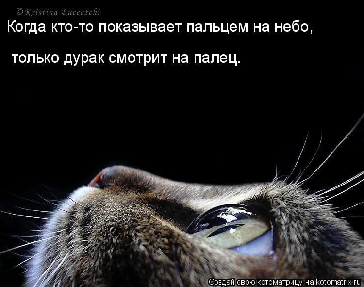 Котоматрица: Когда кто-то показывает пальцем на небо,  только дурак смотрит на палец.