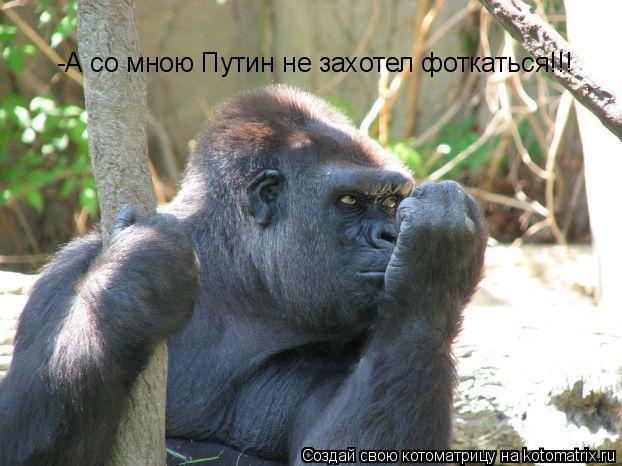 Котоматрица: -А со мною Путин не захотел фоткаться!!!