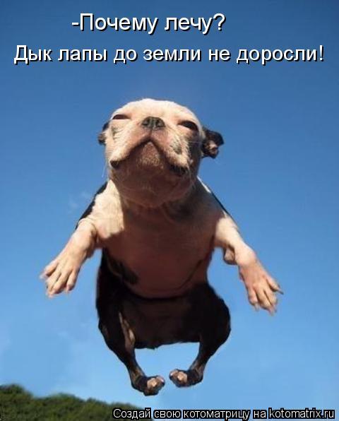 Котоматрица: -Почему лечу? Дык лапы до земли не доросли!