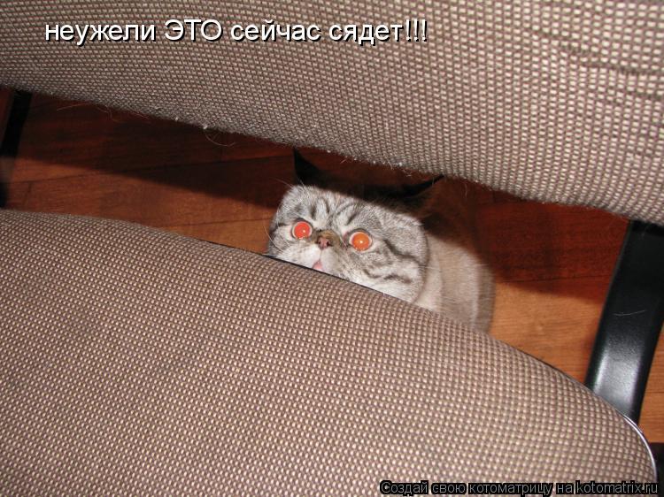 Котоматрица: неужели ЭТО сейчас сядет!!!