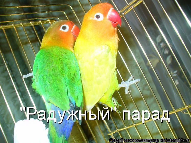 """Котоматрица: """"Радужный"""" парад"""