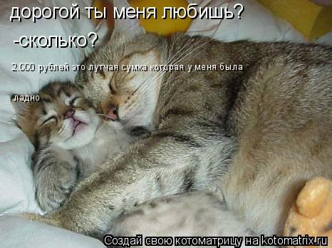 Котоматрица: дорогой ты меня любишь? -сколько? 2.000 рублей это лутчая сумка которая у меня была ладно