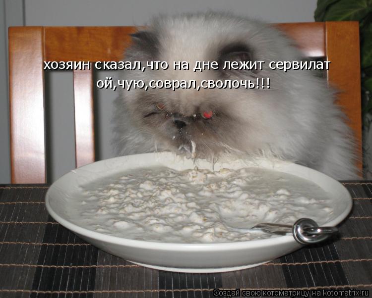 Котоматрица: хозяин сказал,что на дне лежит сервилат ой,чую,соврал,сволочь!!!