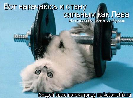 Котоматрица: Вот накачаюсь и стану  сильным как Лева Мечтательно произнес Мурзик