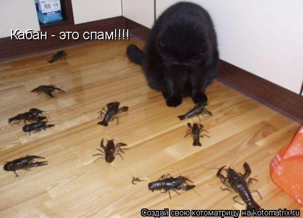 Котоматрица: Кабан - это спам!!!!