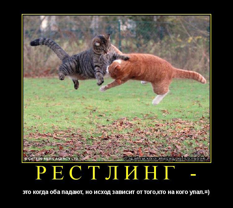 Котоматрица: рестлинг - это когда оба падают, но исход зависит от того,кто на кого упал.=)