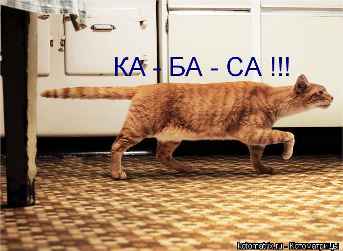 Котоматрица: КА - БА - СА !!!