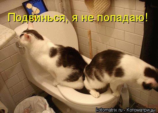 Котоматрица: Подвинься, я не попадаю!