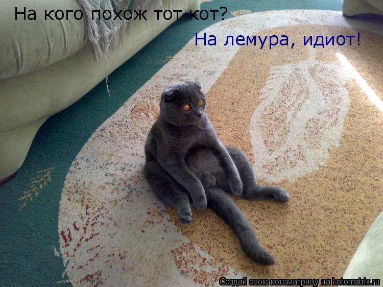 Котоматрица: На кого похож тот кот? На лемура, идиот!