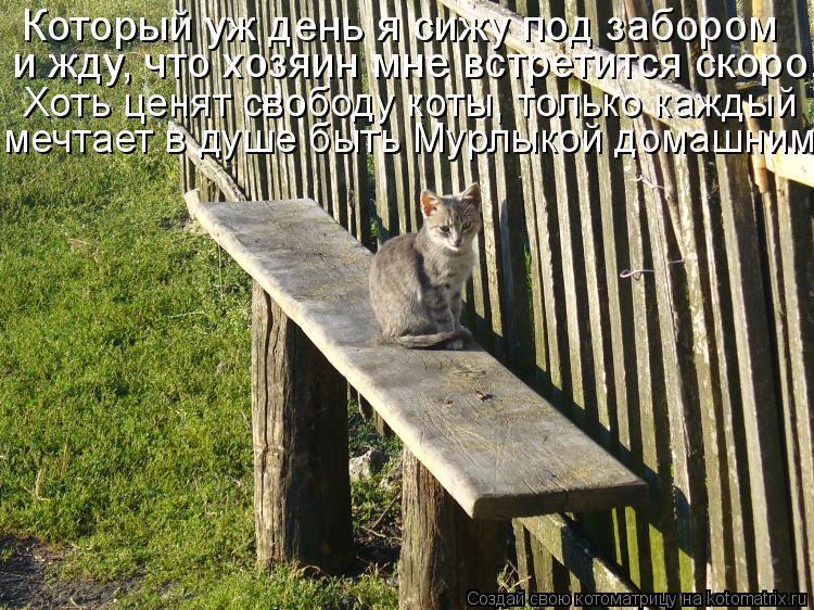 Котоматрица: Который уж день я сижу под забором и жду, что хозяин мне встретится скоро. Хоть ценят свободу коты, только каждый мечтает в душе быть Мурлыко