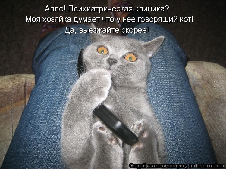 Котоматрица: Моя хозяйка думает что у нее говорящий кот! Алло! Психиатрическая клиника? Да, выезжайте скорее!