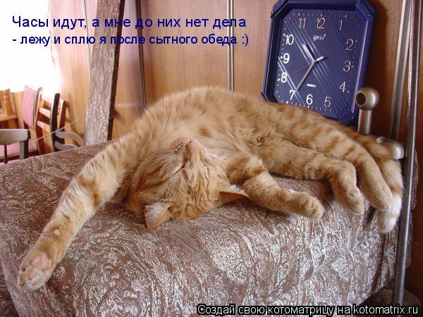 Котоматрица: Часы идут, а мне до них нет дела - лежу и сплю я после сытного обеда :)