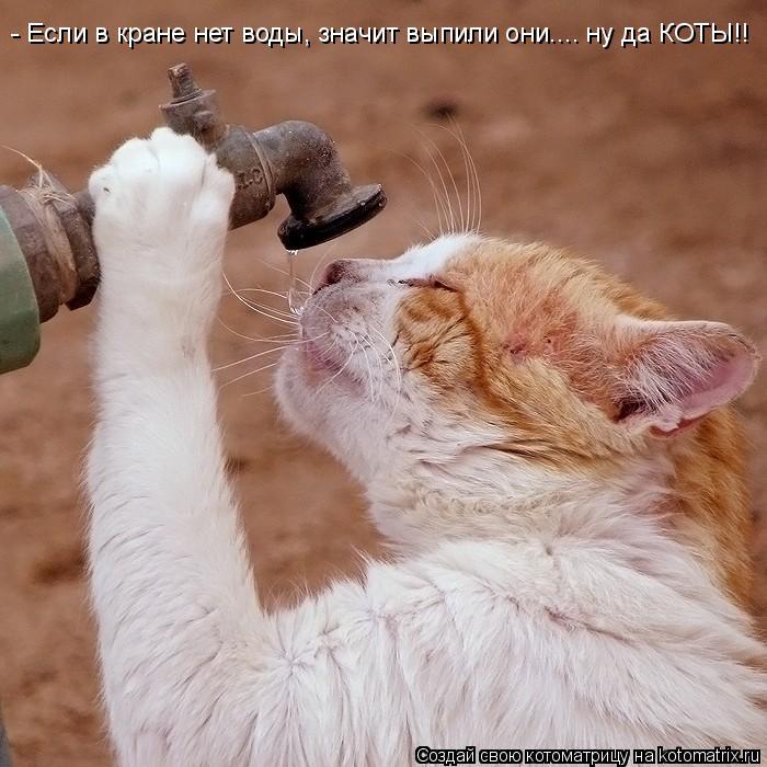 Котоматрица: - Если в кране нет воды, значит выпили они.... ну да КОТЫ!!