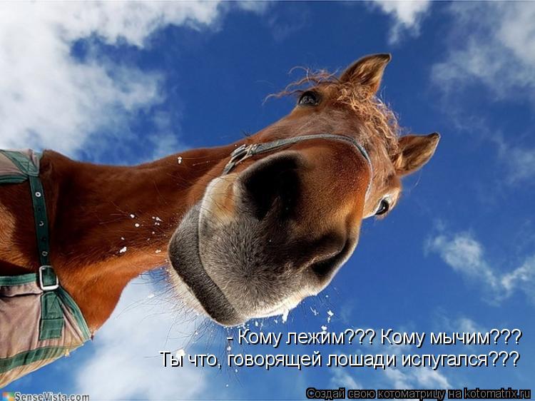 Котоматрица: - Кому лежим??? Кому мычим??? Ты что, говорящей лошади испугался???