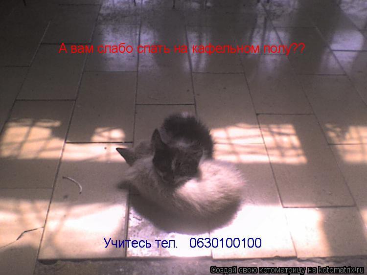 Котоматрица: А вам слабо спать на кафельном полу?? Учитесь тел. № 0630100100 Учитесь тел. № 0630100100