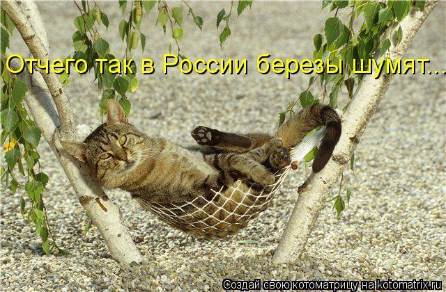 Котоматрица: Отчего так в России березы шумят...