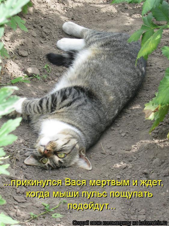 Котоматрица: ...прикинулся Вася мертвым и ждет, когда мыши пульс пощупать подойдут...