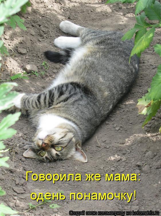 Котоматрица: Говорила же мама: одень понамочку!