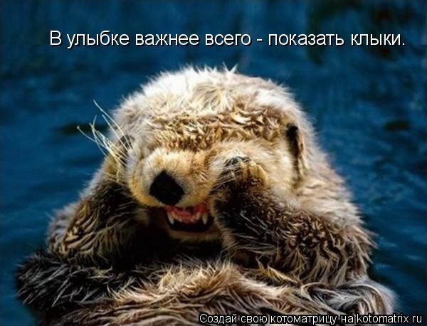 Котоматрица: В улыбке важнее всего - показать клыки.