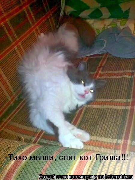 Котоматрица: -Тихо мыши, спит кот Гриша!!!