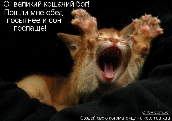 Котоматрица: О, великий кошачий бог! Пошли мне обед посытнее и сон послаще!