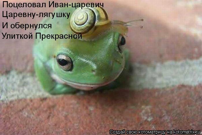 Котоматрица: Поцеловал Иван-царевич Царевну-лягушку И обернулся Улиткой Прекрасной