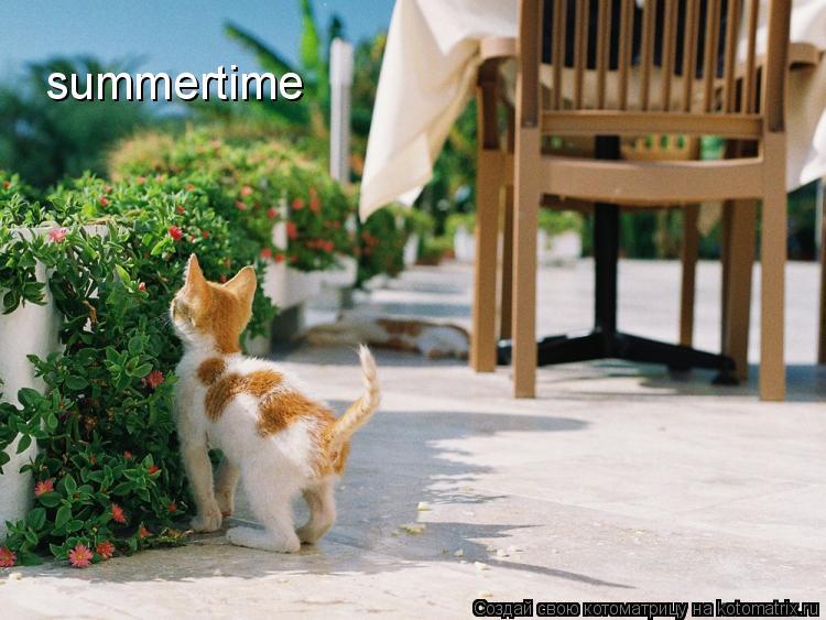 Котоматрица: summertime
