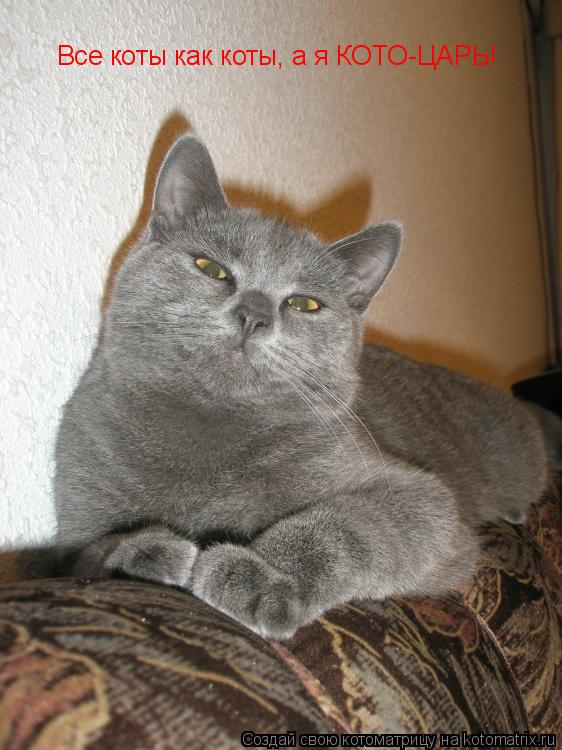 Котоматрица: Все коты как коты, а я КОТО-ЦАРЬ!