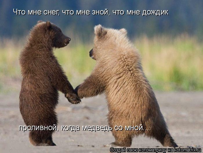 Котоматрица: Что мне снег, что мне зной, что мне дождик проливной, когда медведь со мной....