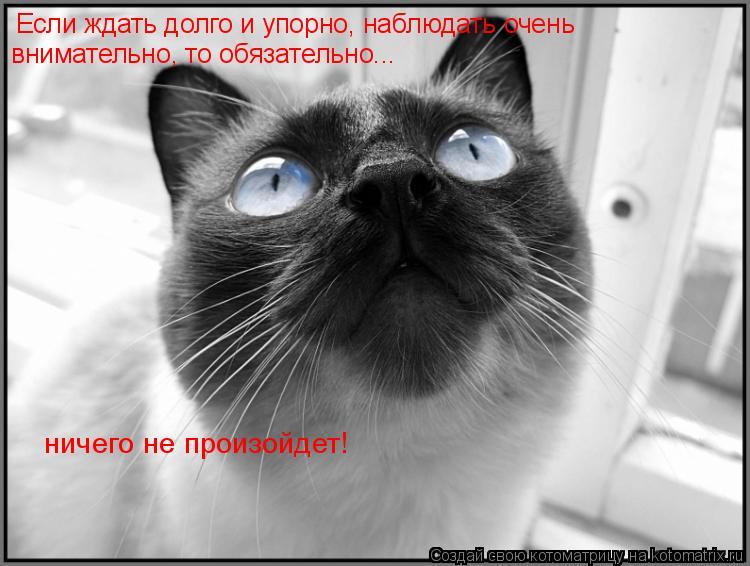 Котоматрица: Если ждать долго и упорно, наблюдать очень внимательно, то обязательно... ничего не произойдет!