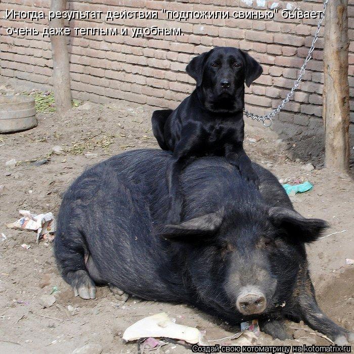 """Котоматрица: Иногда результат действия """"подложили свинью"""" бывает очень даже теплым и удобным."""
