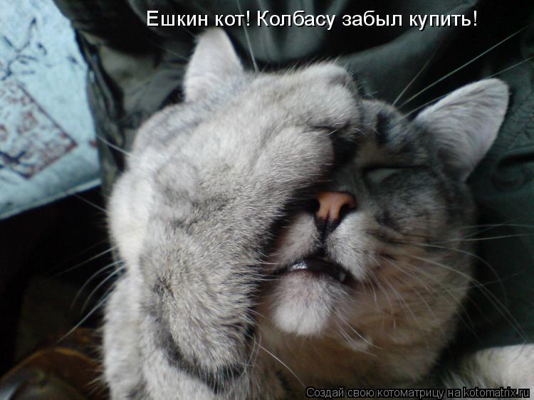 Котоматрица: Ешкин кот! Колбасу забыл купить!