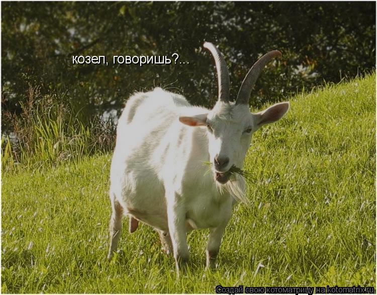 Котоматрица: козел, говоришь?...