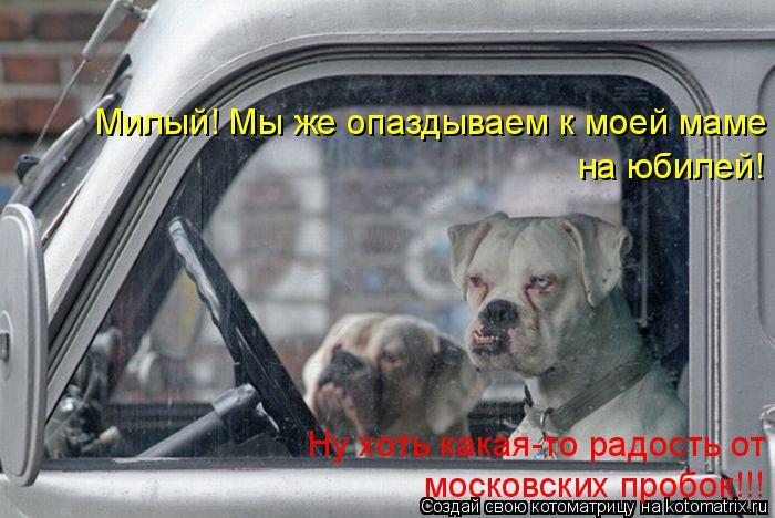Котоматрица: Милый! Мы же опаздываем к моей маме  на юбилей! Ну хоть какая-то радость от  московских пробок!!!
