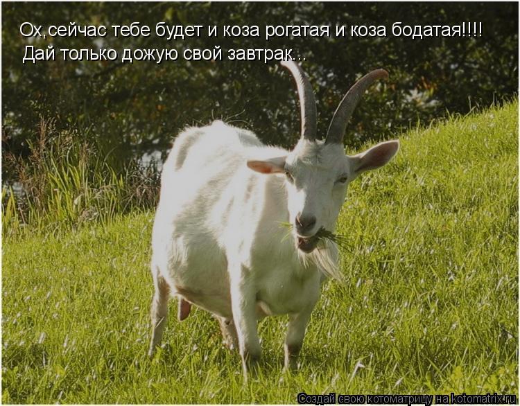 Котоматрица: Ох,сейчас тебе будет и коза рогатая и коза бодатая!!!! Дай только дожую свой завтрак...