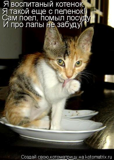 Котоматрица: Я воспитаный котенок. Я такой еще с пеленок! Сам поел, помыл посуду И про лапы не забуду!