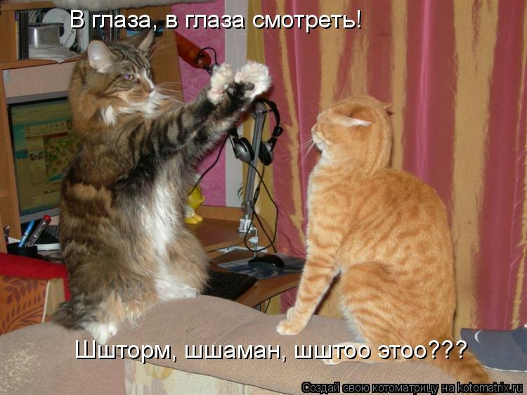 Котоматрица: В глаза, в глаза смотреть!  Шшторм, шшаман, шштоо этоо???