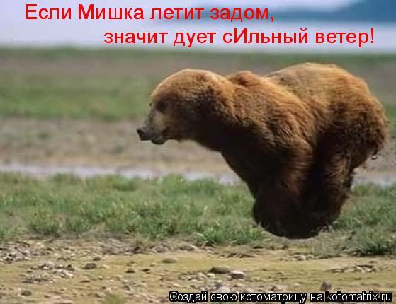 Котоматрица: Если Мишка летит задом, Если Мишка летит задом, значит дует сИльный ветер!